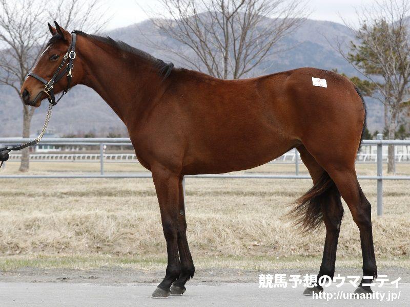タマモカトレア2015年産 - 競走馬データTOP 競馬予想のウマニティ ...