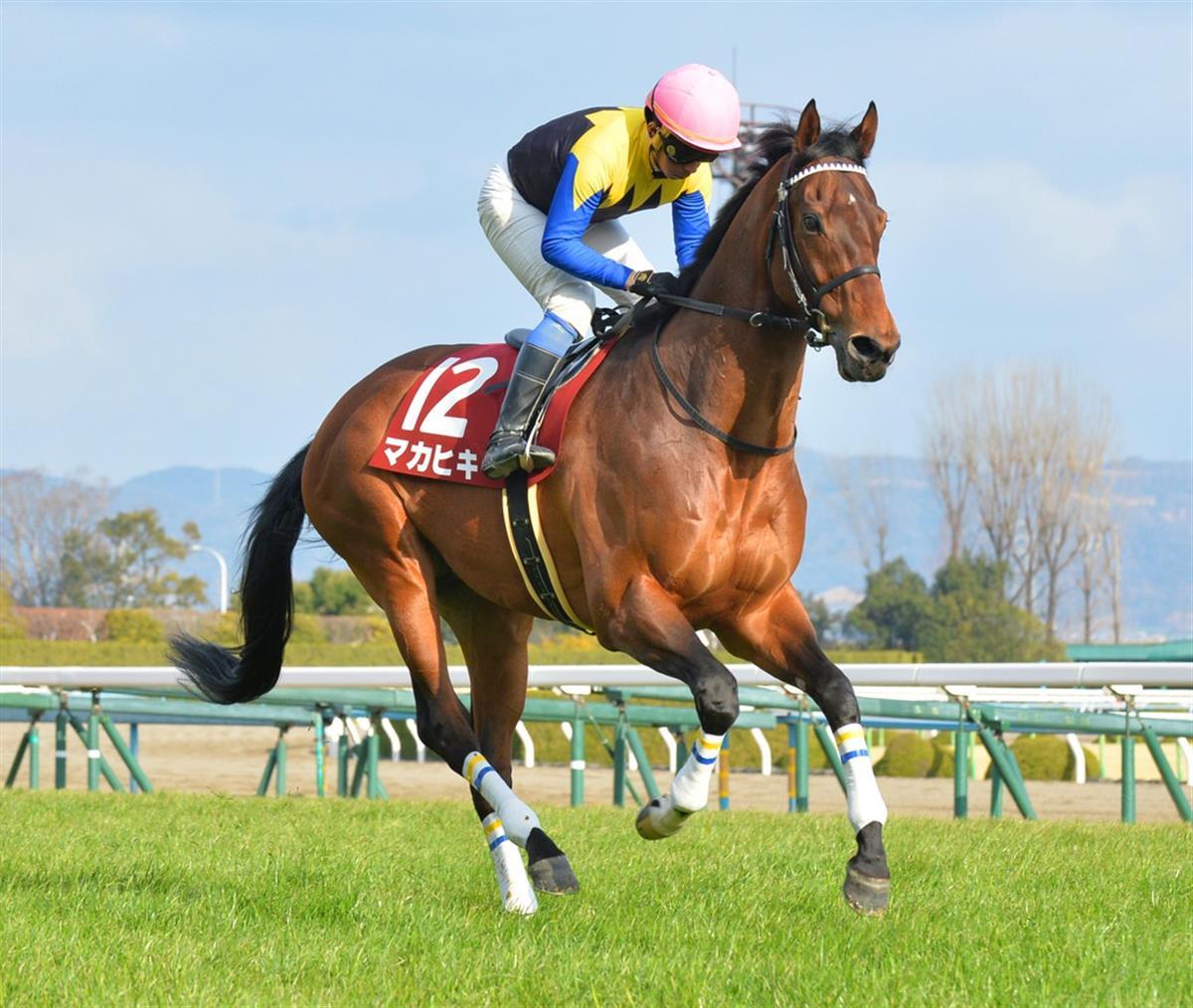 マカヒキ - 競走馬データTOP|4月5日大阪杯 G1【11着】|競馬予想の ...