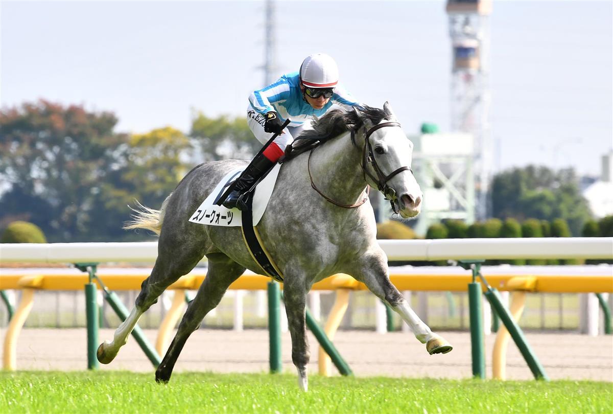 東京5R・新馬】ゴールドシップ産駒スノークォーツが中団からV|競馬 ...